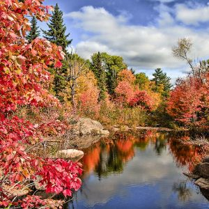 fall colours on the canadian shield